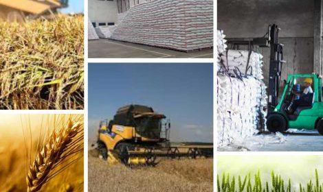 تنوع محصول