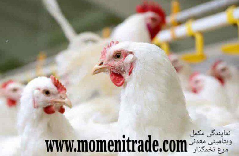 مکمل ویتامینی و معدنی خوراک مرغ تخمگذار